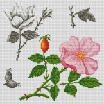 modèle point de croix fleur gratuit