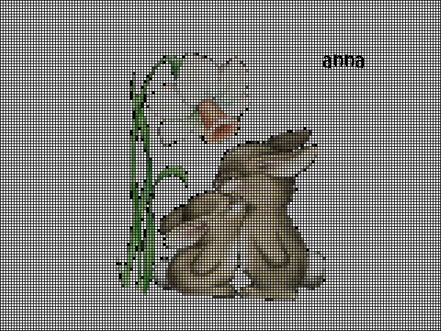 grille point de croix lapin #11