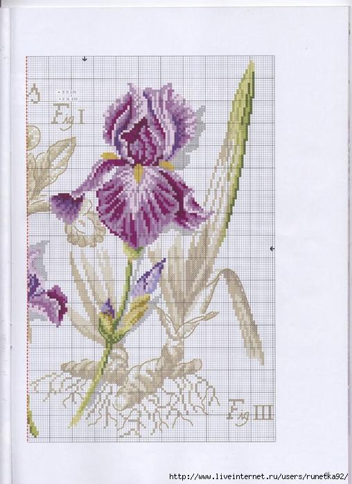 point de croix iris
